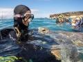 Diving Tenerife (2)