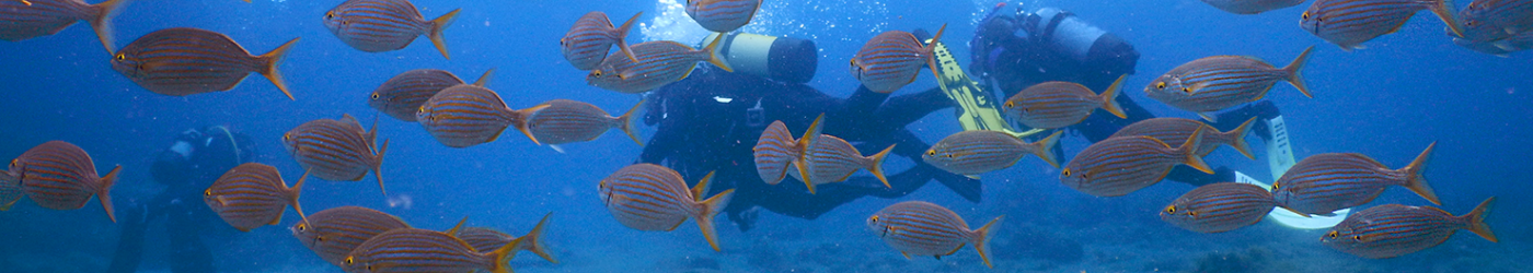PADI-Divemaster-Internship-Academy-Diving-School-Fish