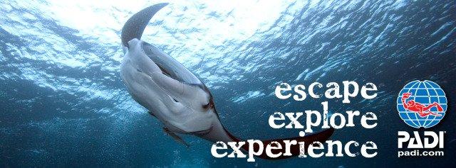Divemaster Internship Tenerife